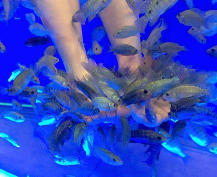 角質を好んで食べてくれる魚たち(Photo by 朝比奈)