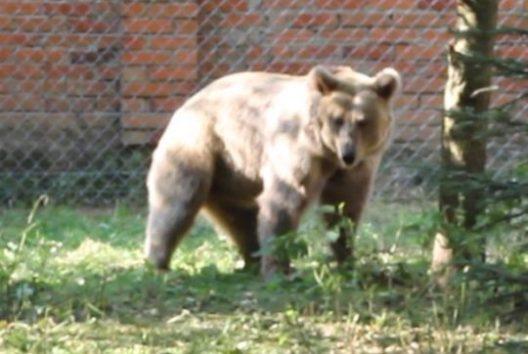 マーシャ、曲芸からやっと解放され動物保護区へ