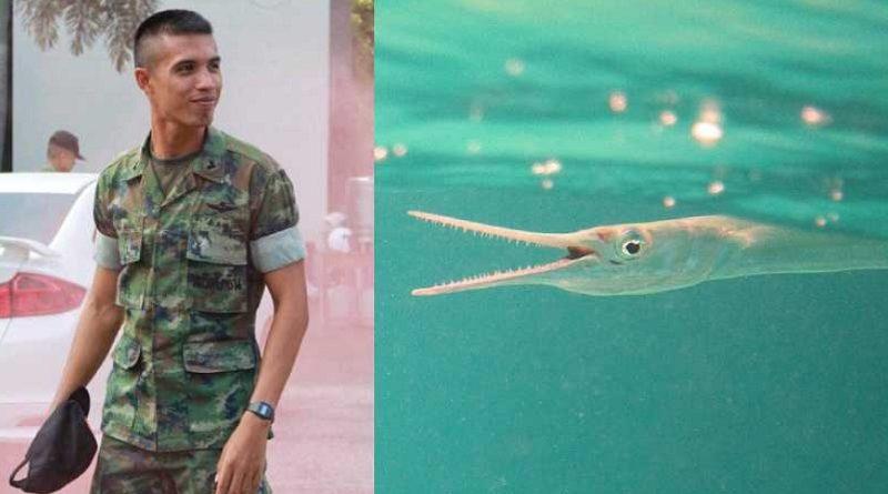 出刃包丁のような魚「ダツ」の攻撃で海兵隊員が死亡