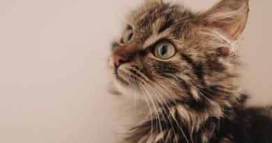 子猫たちが毒物実験の犠牲に(画像はイメージです)