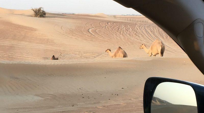 砂漠の豪快なドライブ「デザート・サファリ」は楽しいのですが…(Photo by 佐藤めぐみ)
