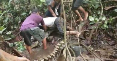 巨大なニシキヘビ、男性の足首に絡まって離れようとせず