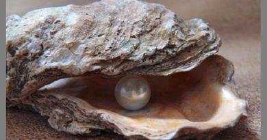 牡蠣料理から美しい真珠の粒が(画像はイメージです)