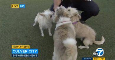 カリフォルニア州、犬が欲しい者は保護センターへ