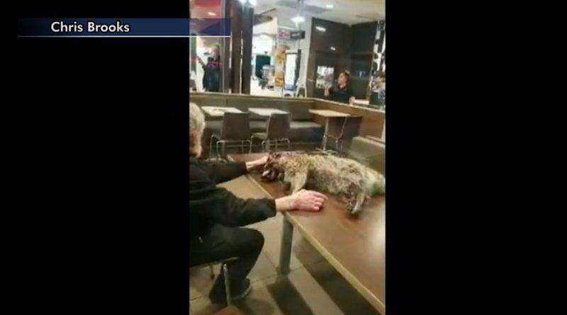 男、アライグマの死骸とともに入店