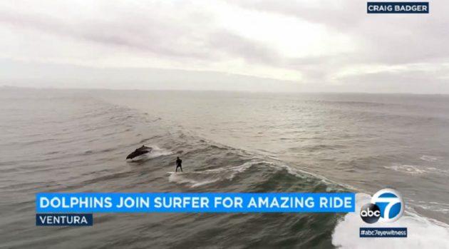 サーファーとイルカは仲良し!