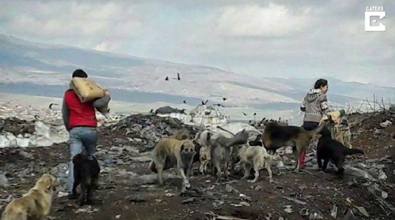 ゴミ捨て場が犬捨て山に