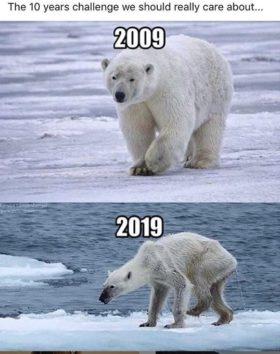 地球温暖化の一つの目安となるホッキョクグマの生態