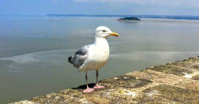 鳥のように自由に空を飛べればどこへでも(Photo by 朝比奈)