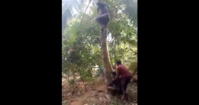 ココナッツの木に登るだけじゃだめ。どうやって手を使う…!?