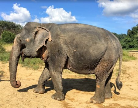 象に触ったのも、こんなに近くから見たのも初めて(Photo by 朝比奈)