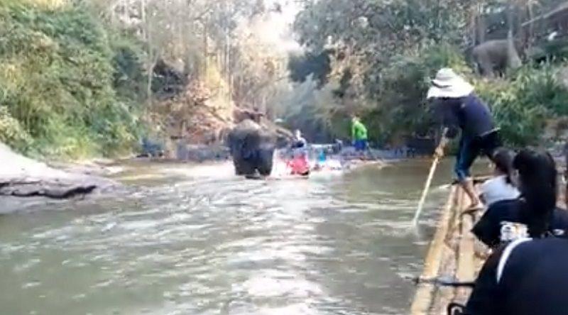 ゾウが竹の筏に体当たりする