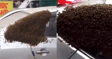ハチの群れに襲われた車