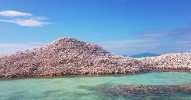 カリブ海に浮かぶ「コンク島」。数千年をかけ、あるものを積んで造られた