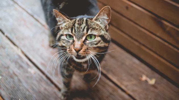 犬や猫からうつるパスツレラ菌を侮るなかれ