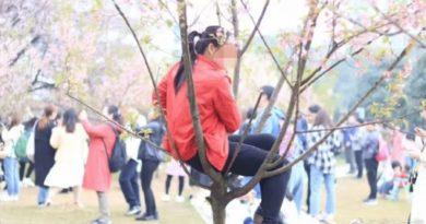 桜の木が泣いている…