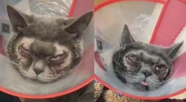 ネコが二重瞼にさせられる