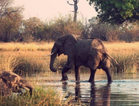 象が密猟者を踏み殺したか。