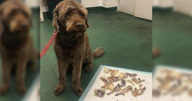 画像:『FOX NEWS』(Photo:Murphy & Co Veterinary Practice)