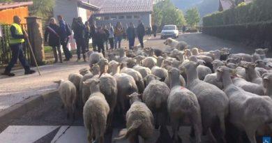 画像:『SKY NEWS』Sheep registered as pupils in bid to save classes at French Alps primary school(Photo:France Bleu)
