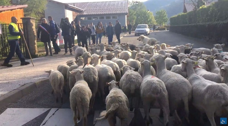 画像:『SKY NEWS』Sheep registered as pupils in bid to save classes at French Alps primary school(Photo:France Bleu)