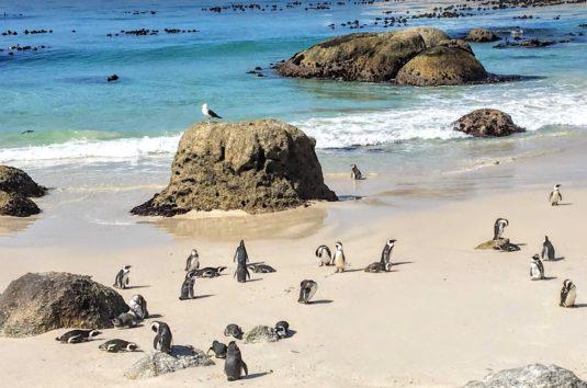 ペギンコロニーがあるボルダーズビーチは海がとても美しい(Photo by 朝比奈)
