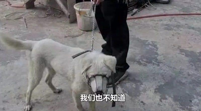 「大好物だった」捨て犬をもらってきてはすぐ調理 野蛮な男に警察も動く 中国
