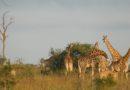 <世界旅紀行>『アフリカ』その5 タイドン・ブッシュ・キャンプ@クルーガー国立公園サビサンド私営動物保護区