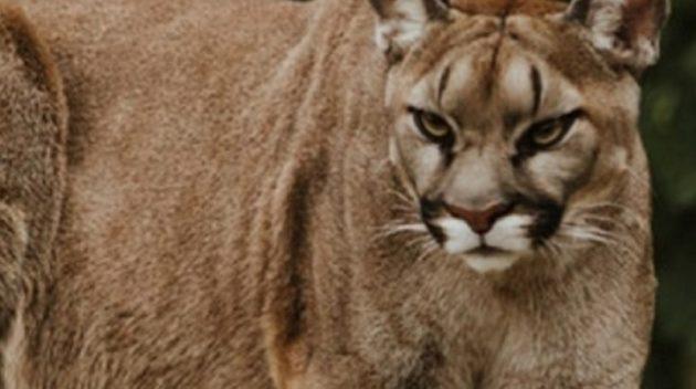 こんな動物に襲われても生還した少年が話題に。(画像はイメージです)