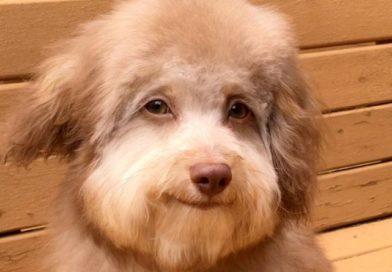 とっても「人面犬」な笑顔を見せるワンちゃん 癒されたい人々の間で大ブレイク!