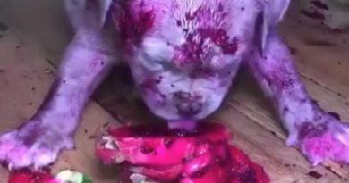 全身がピンク色と化した子犬