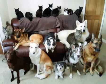 おとなしい犬たちと気まぐれな猫たち。大集合は至難の業だった。