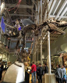 恐竜は大きすぎて自らの体を持て余してしまった…わかります(Photo by 朝比奈)って(Photo by 朝比奈)