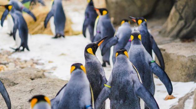 ペンギンはお話が好き(画像はイメージです)