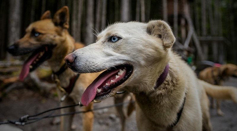 【シェルター運営者、犬に一部食われたか。(画像はイメージです)】