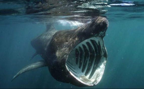 全長8メートルものサメに遭遇するとは…!
