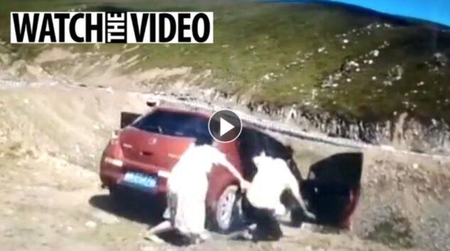 <海外バイラル動画>「降りて!」にピンとこなかった助手席の女性… 崖から転がり落ちる恐怖の瞬間